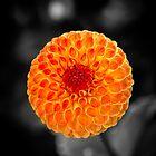 Fire Flower by danielgriffin