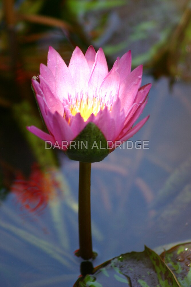Lily Torch by DARRIN ALDRIDGE