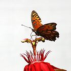 Gulf Fritillary with Red Passion by DARRIN ALDRIDGE