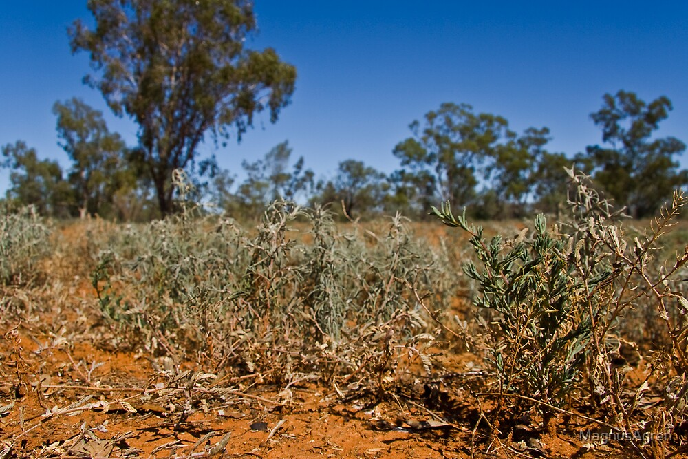 Shrubs of the Outback by MagnusAgren
