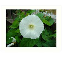 White (Morning Glory) GRRR!! Art Print
