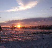 ice storm 1 by pictureman65622