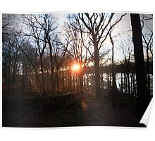 The Enchanted Woodland Poster