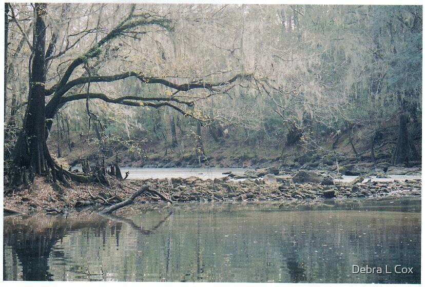 A Spooky Tree by Debra L Cox
