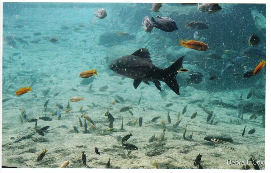 A tank of FISH by Debra L Cox