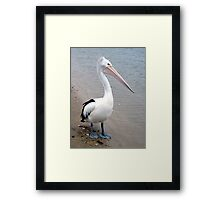 Introducing Cockles  Framed Print