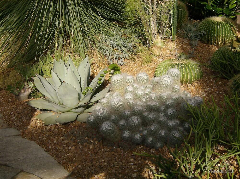 Desert Plants by steelwidow