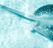 Blue Spotted Ray Sticker