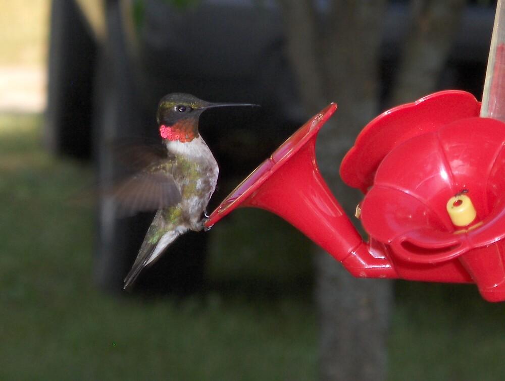 HUMMINGBIRD by ankelika