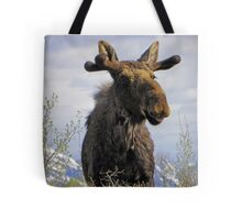 Young Bull in the Tetons Tote Bag