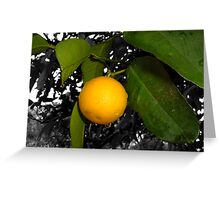 Lonely orange on tree Greeting Card