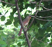 A Cardinal's Interest by Albert Grable