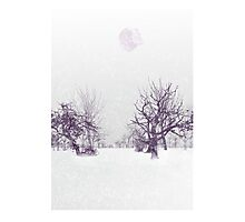 Subtle Seasons greetings Photographic Print