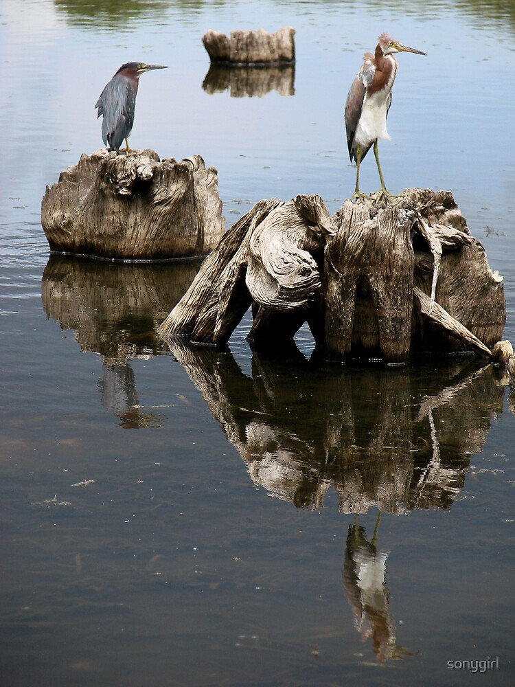two herons by sonygirl