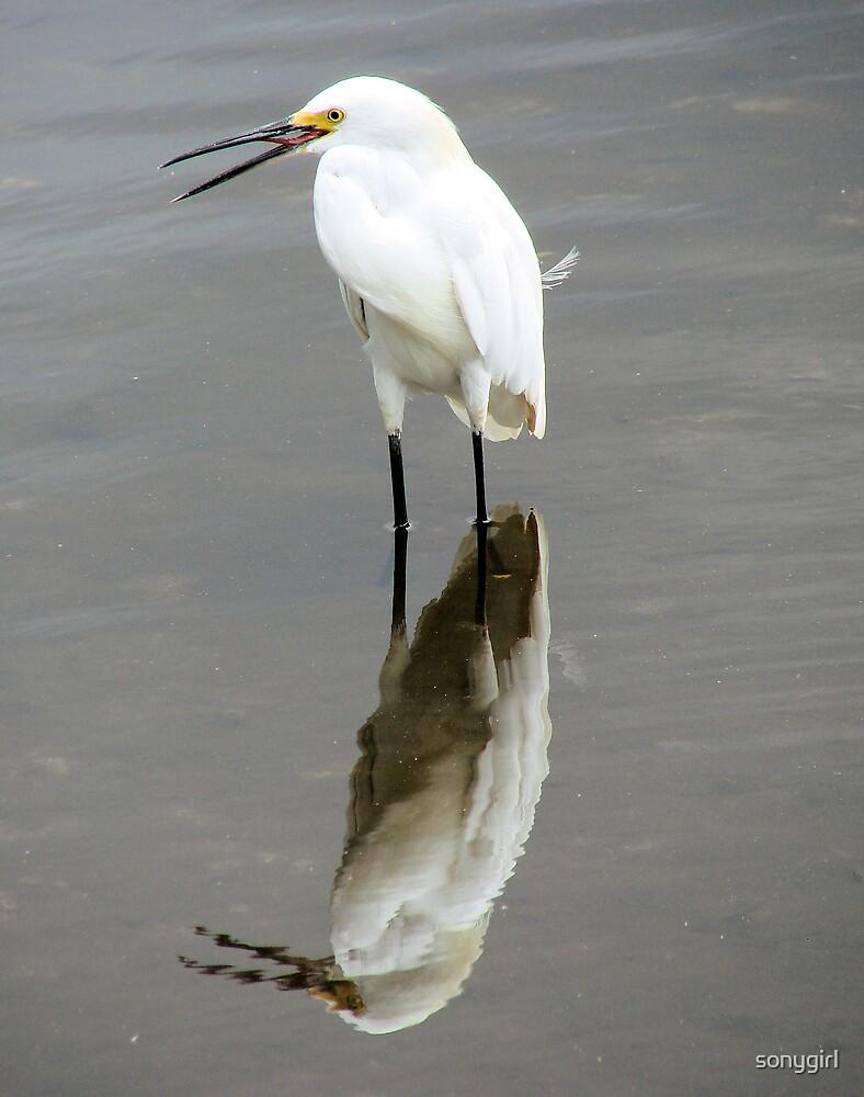 lesser egret by sonygirl