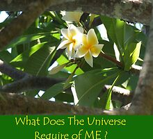 "Frangipani Peeking with caption ""What Does the Universe Require of Me?"" by Cathie Sherwood"