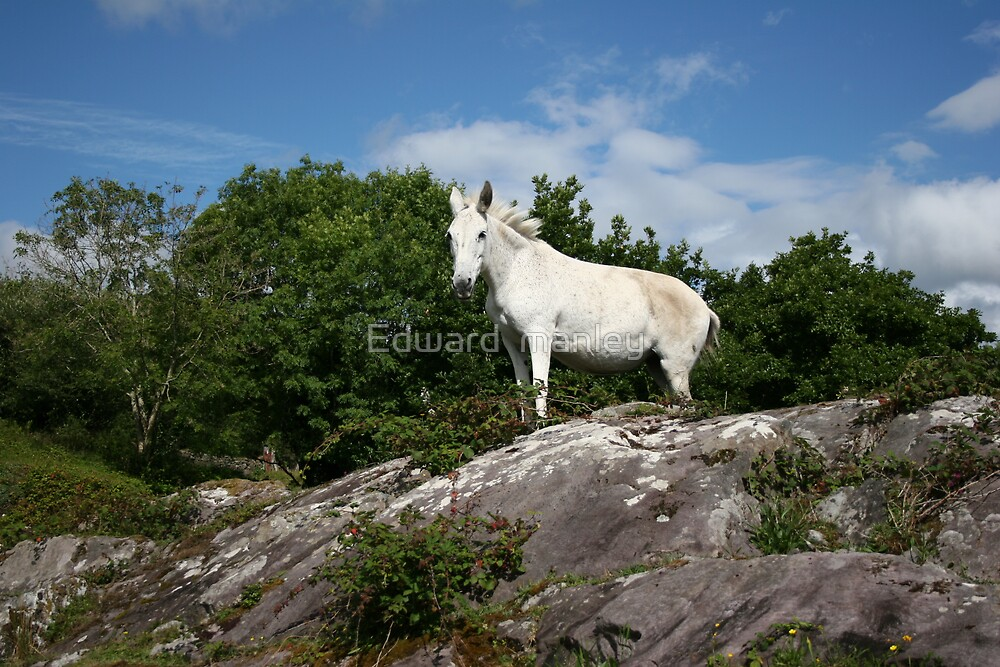 white by Edward  manley