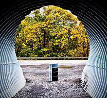Through the Tunnel by organicmindset