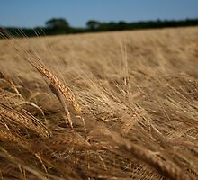 harvest is ripe labours are few. by Edward  manley