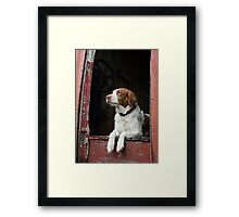 Waiting For The Hunt Framed Print