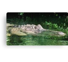 big gator Canvas Print
