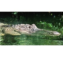big gator Photographic Print