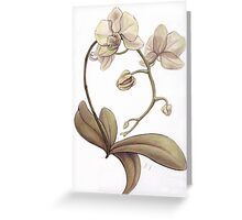 Orchid III Greeting Card