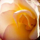 Soft Morning Dew by craigNdi