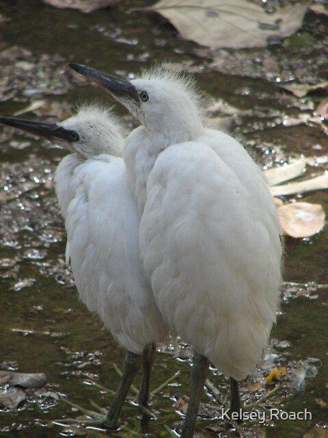 baby ibis by Kelsey Roach