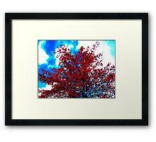 fall color in Oz Framed Print