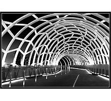 Black Webb Photographic Print