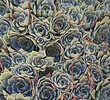 Succulent by Bronwyn  Murphy