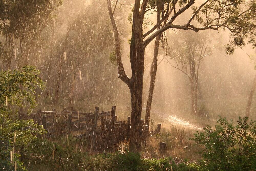 Bocoble Sun Shower by Bronwyn  Murphy