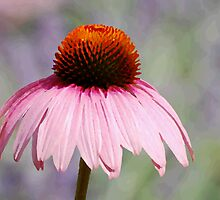 Pretty in pink by John Pacifico
