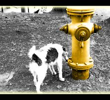 Firehydrant comes to life by jdflynn