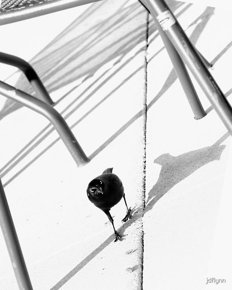 Blackbird by jdflynn