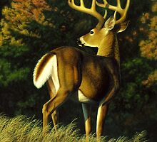 Indecision - Whitetail Buck by csforest