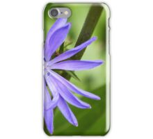 Single Purple Chicory Flower iPhone Case/Skin