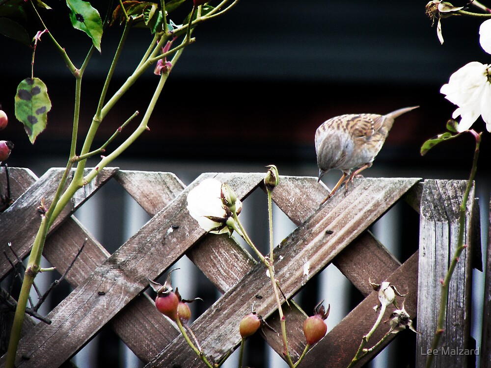 On The Fence by Lee Malzard