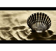 Shell Shocked Photographic Print