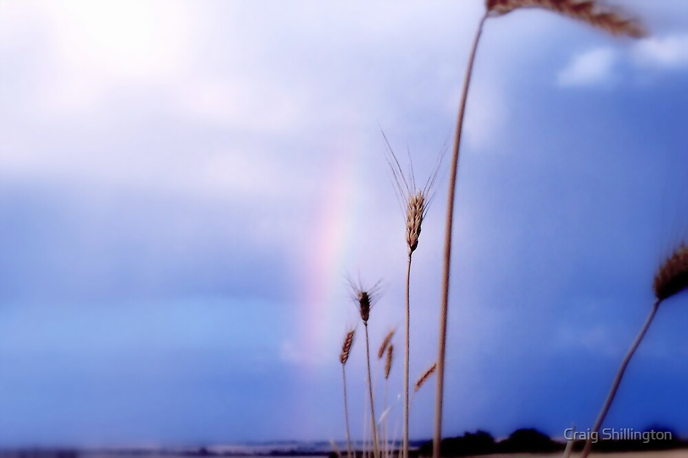 Prayers For Rain by Craig Shillington