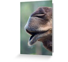 Camel Muzzle Greeting Card