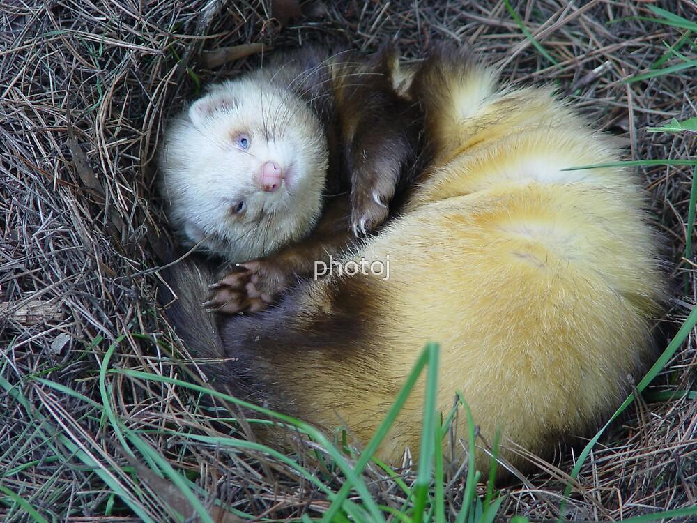 photoj  animals by photoj