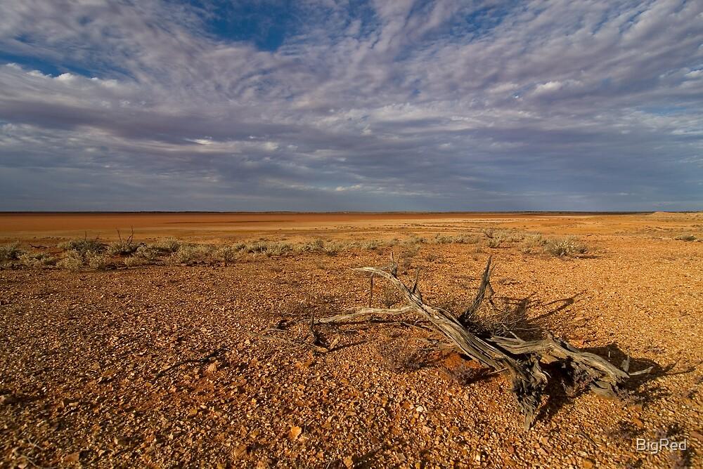 Desert Wood by BigRed