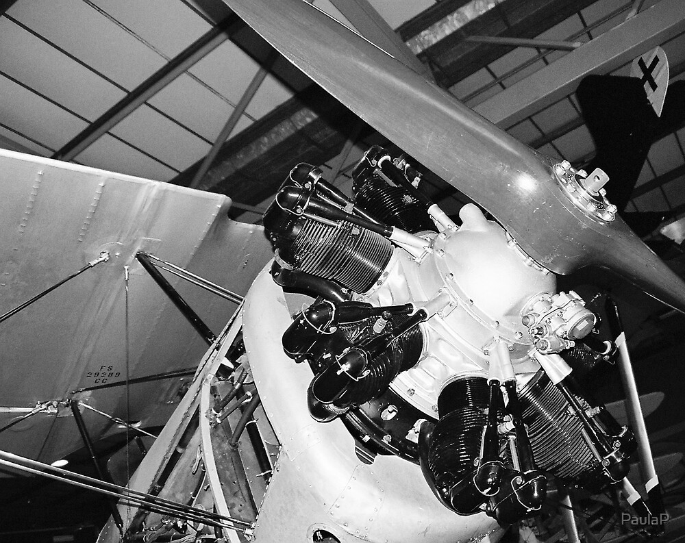 Fairey Flycatcher closeup by PaulaP