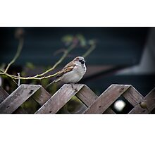 Fatty On da Fence Photographic Print