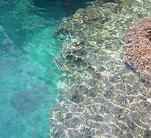 Coral Reef by twiggylee77