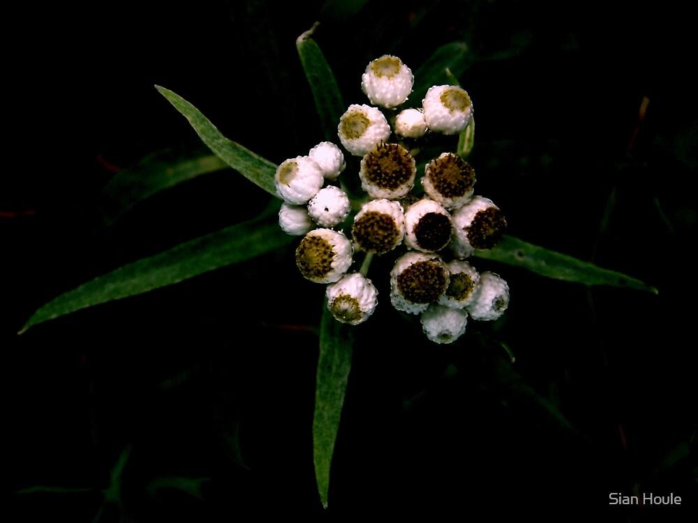 cluster by Sian Houle