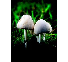 A pair of Mushrooms Photographic Print