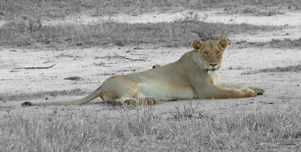 Lioness by PaulaP